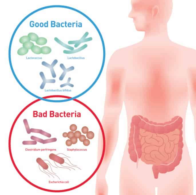 Streptococcus Thermophilus – Benefits of a Milk-Based ...