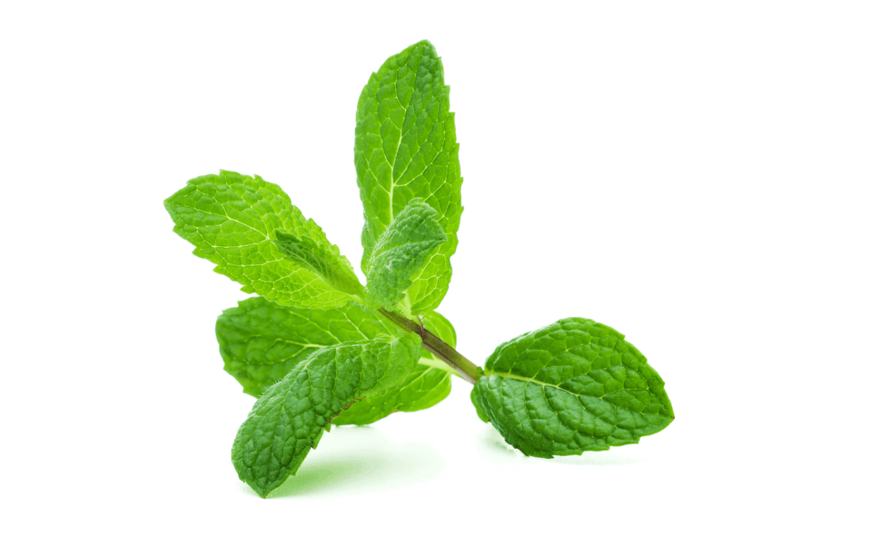 Atrantil ingredients peppermint
