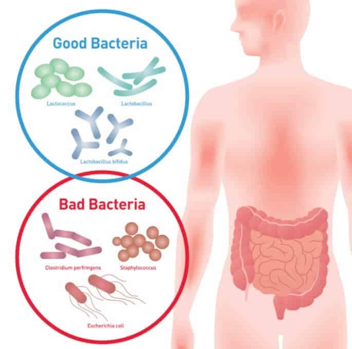 Benefits of Probiotics
