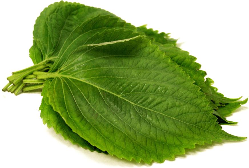 Relacore-ingredients-perilla-leaf