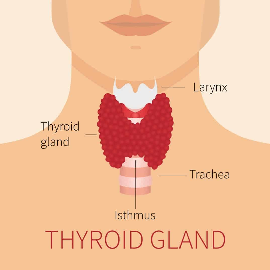 Thyroid and Weight Loss – Can Thyroid Problems Promote ...
