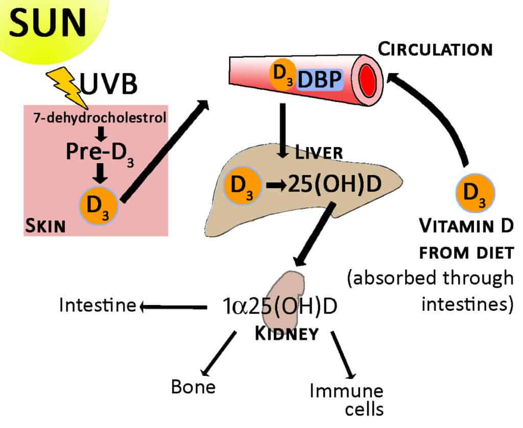 Things You Need To Know About Vitamin D Supplements