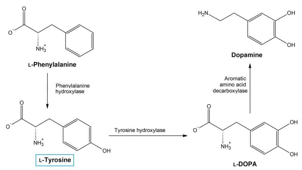 What is L-Tyrosine