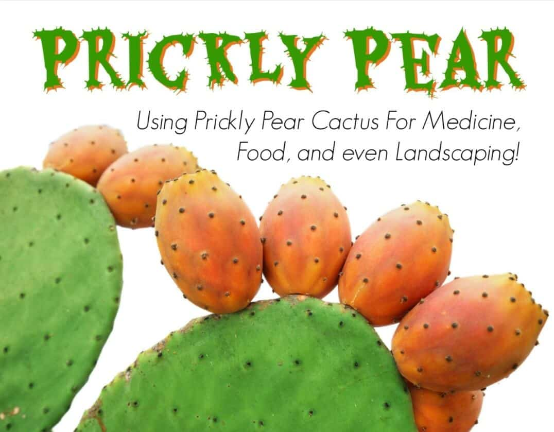 What is a Prickly Pear