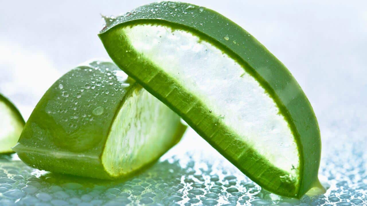 Aloe vera promoting wellness