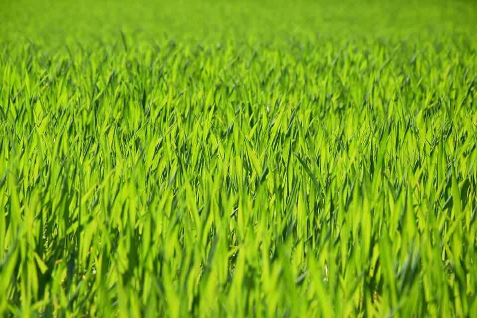 Amazing Grass Customer Testimonials