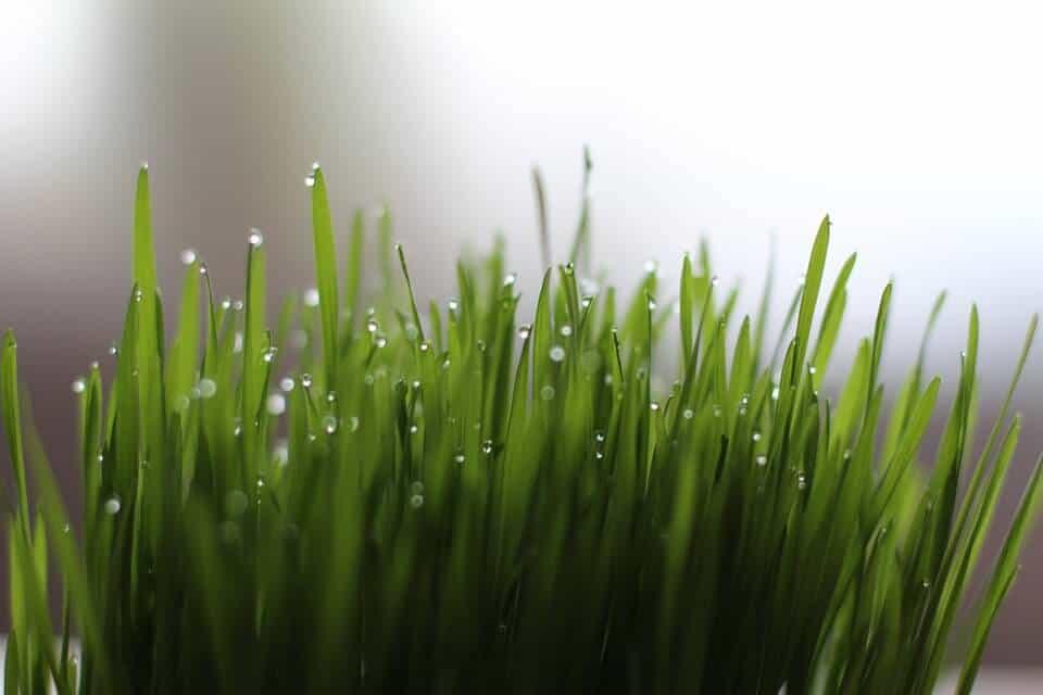 Amazing Grass Ingredients