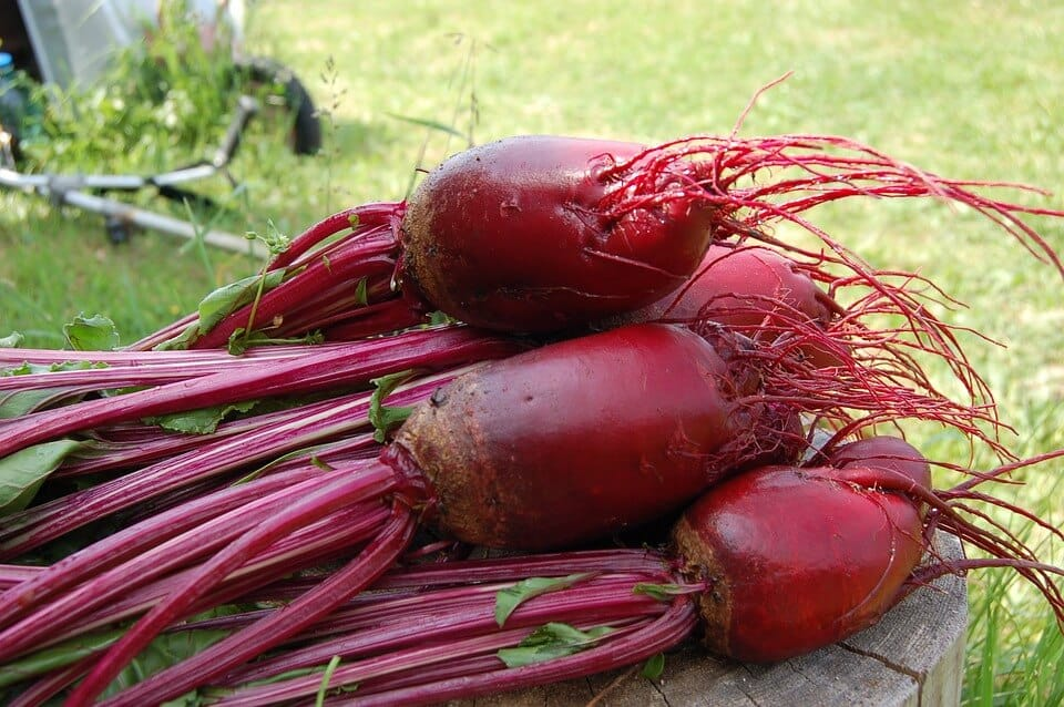 fresh picked beets and roots