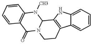 Evodiamine Review