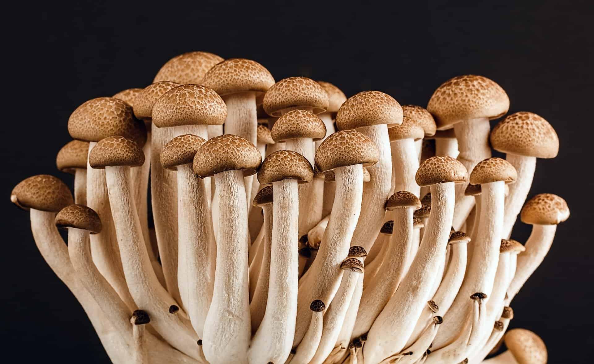 Genius Mushrooms Customer Testimonials