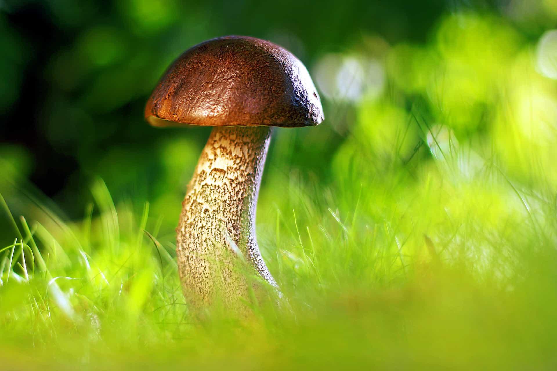 Genius Mushrooms Ingredients