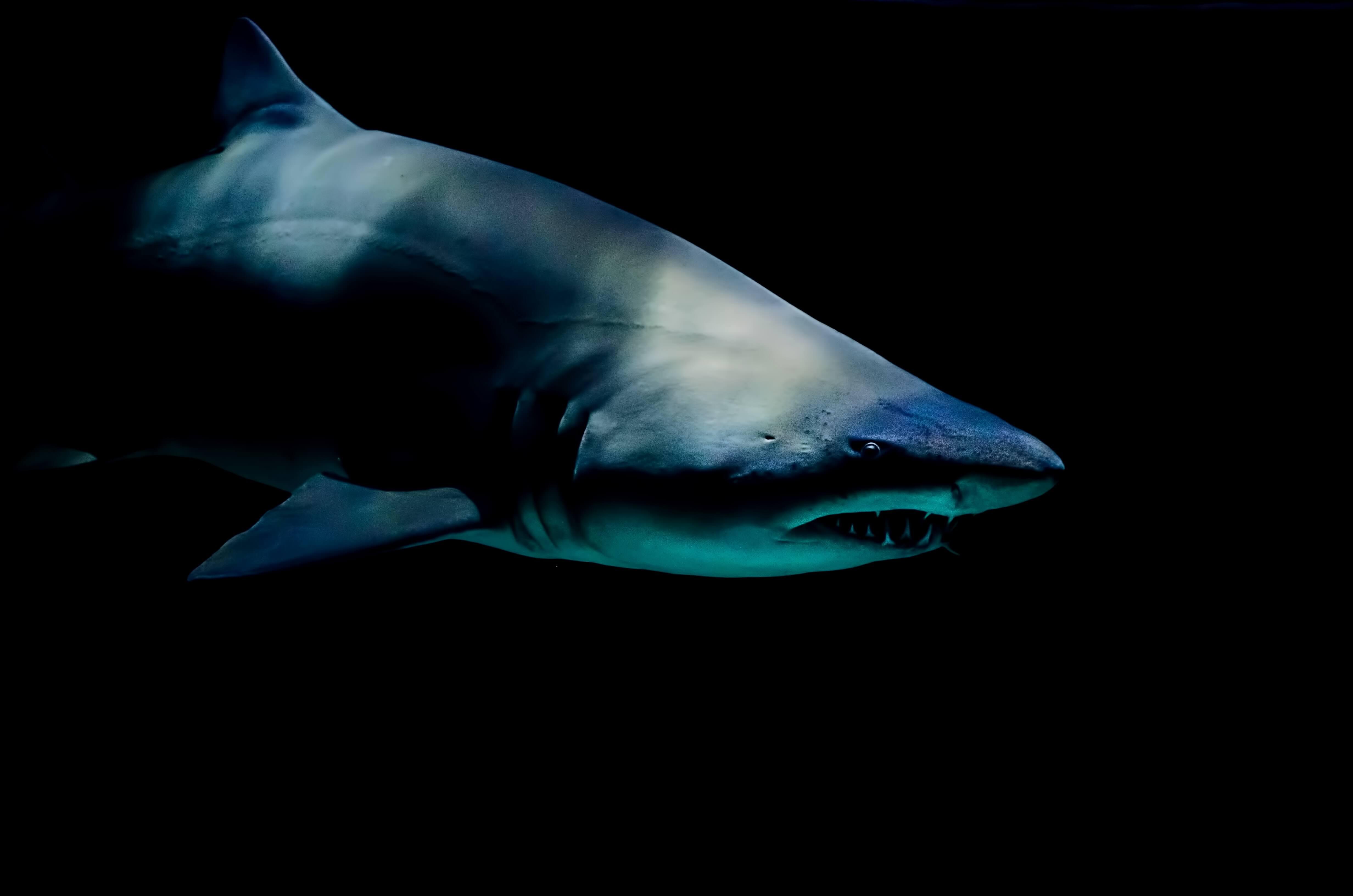 sailing_and_sharks