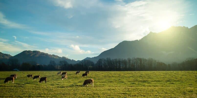 low carb foods pasture