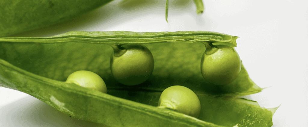 modere sustain pea protein - four peas in a broken pod