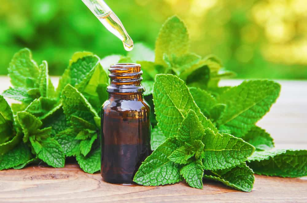 Peppermint and GI distress