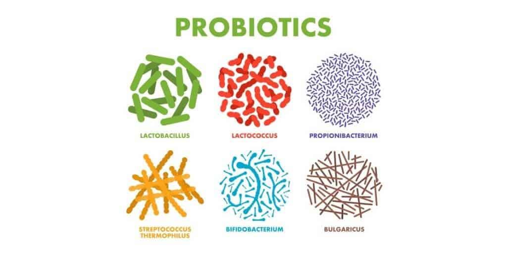 ingredients in plexus vitalbiome