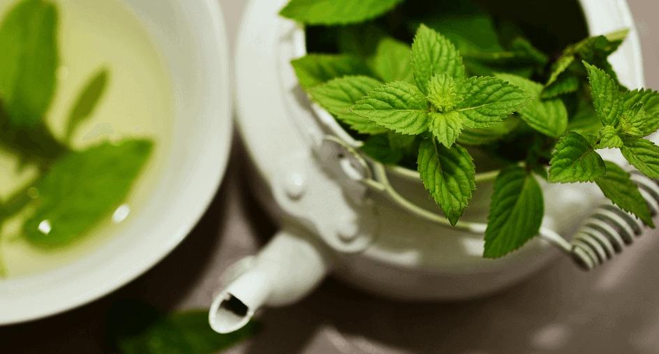 meratrim ingredients green tea