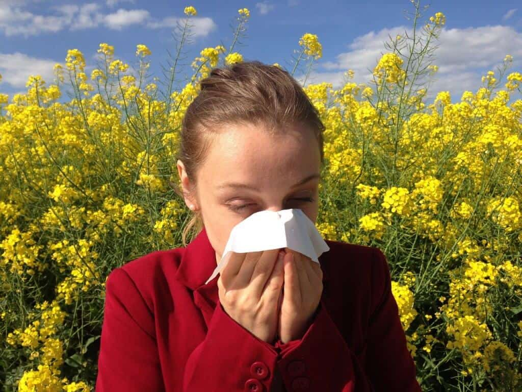 probiotics and allergies